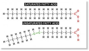 saturated_fatty_acid